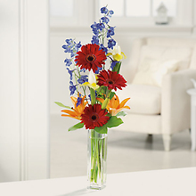 Gerbera Greetings